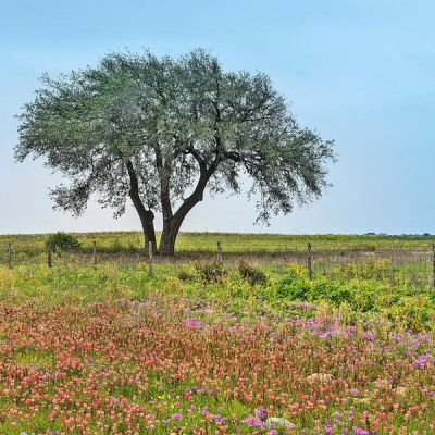 Carol Highsmith Texas Wildflowers: Atascosa County
