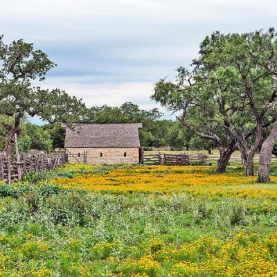 Carol Highsmith Texas Wildflowers: Barn in Johnson City